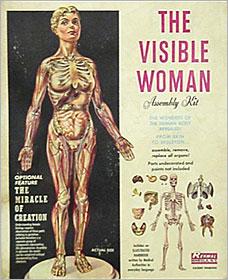visiblewoman.jpg