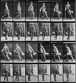 Muybridge Walking