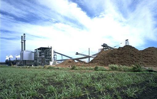 Biomass Power designed to burn   biomass