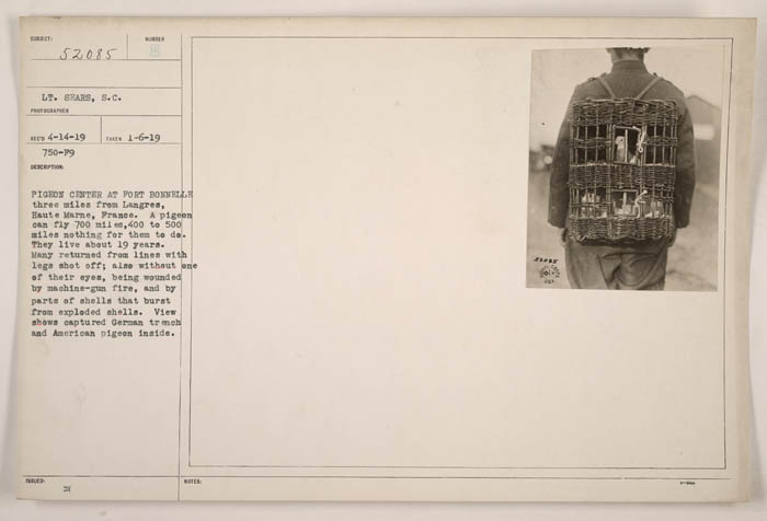 A manila document with a typewritten description and a small photograph of pigeons in a basket
