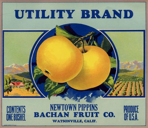 "An crate label with ""Newtown Pippins Bachan Fruit"" on it."