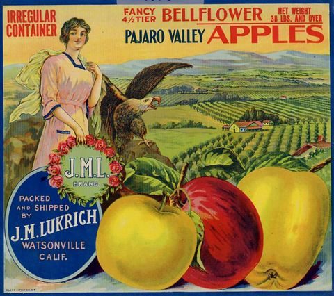 "A label that reads ""Bellflower Apples"" with three apples, a woman, an eagle, and an orchard."