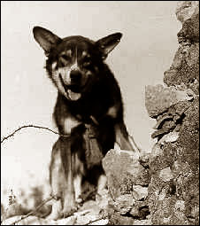 Black and white photo of a dog facing camera. He's behind a rock outcropping.