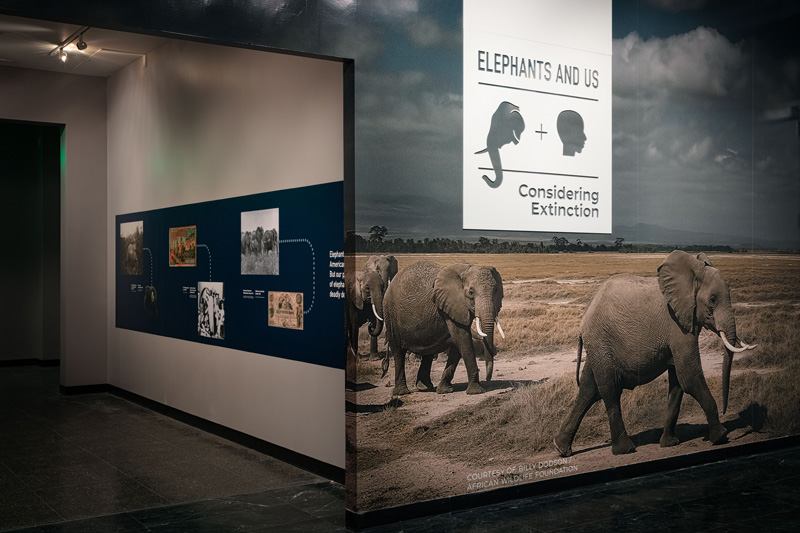 Entrance to Elephants and Us exhibition