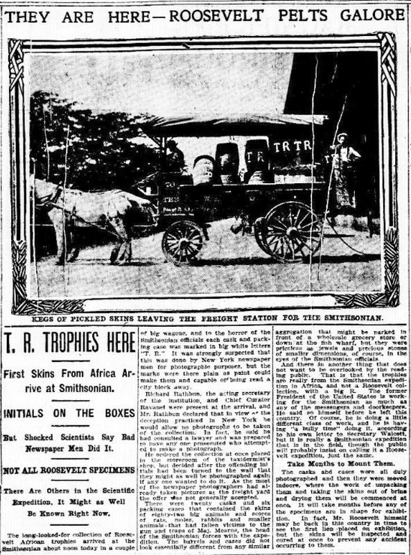 """Newspaper article with title """"They Are Here - Roosevelt Pets Galore"""" that features photo of a horse-drawn wagon stacked with barrels, many of which bear the large white initials """"TR."""""""
