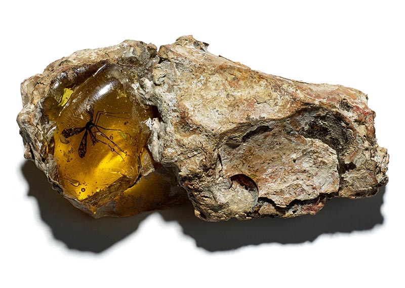 Movie prop, rock with mosquito trapped in amber