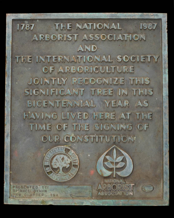 This bronze plaque stood before Oregon's Big Pine from 1989 to 2017. It states: 1787–1987 The National Arborist Association and the International Society of Arboriculture jointly recognize this significant tree in this bicentennial year as having lived he