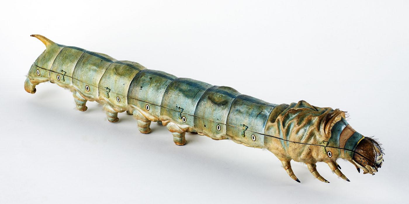 A silkworm model.