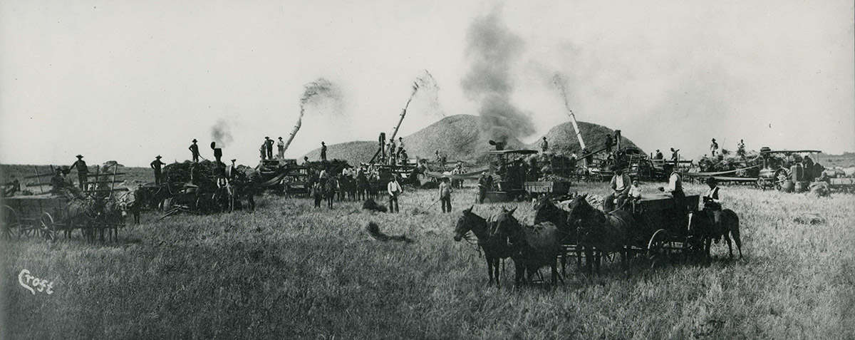 A black and white photograph of a harvest. You can see horses pulling wagons and engines. Tubes shoot something--steam, coal dust, threshed wheat most likely--into large heaps.