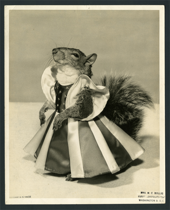 A squirrel in a dress looks up and to the left.