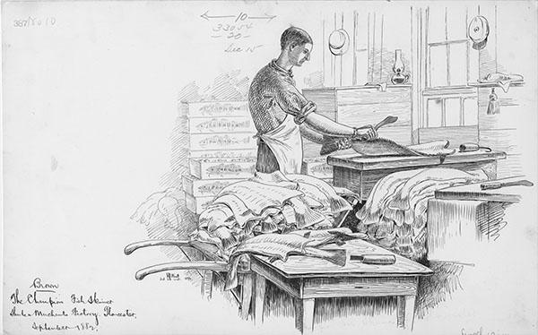 """Brown, the champion fish skinner, Shute & Merchant, Gloucester, Massachusetts,"""" by H Elliott.  September 1882."""