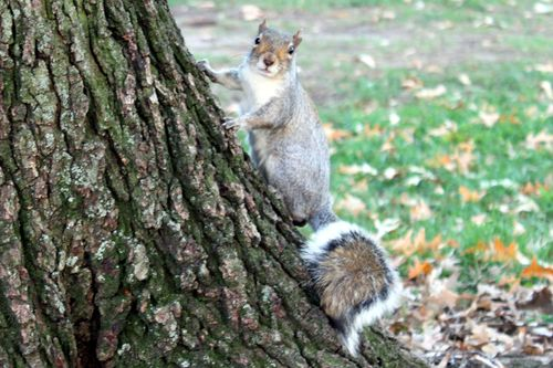 Squirrelpose