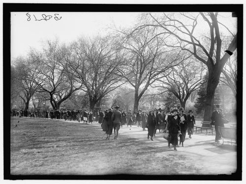 Cherry blossoms in Potomac Park 1919
