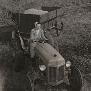 Mary Hawley Bardole driving a Ford tractor and towing a flare box wood wagon full of soybeans. In the background is a harvester, Rippey, Iowa, mid to late 1940s.