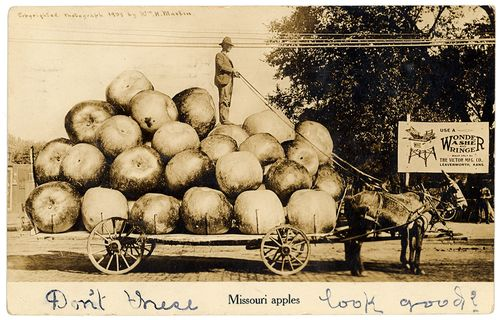 Missouri apples, exaggeration postcard, Wm. H. Martin, 1909 Sent from N.E. Hillock to Mrs. Fred Reinhardt, Merriam, Kansas. Postmarked: Lexington, MO, June 24, 1909 Message on the back: All's well in Lex- I have not forgotten you Lily. But have been so busy and it has been so warm I have never had time to write. But will write soon. With best wishes From N.E. Hillock
