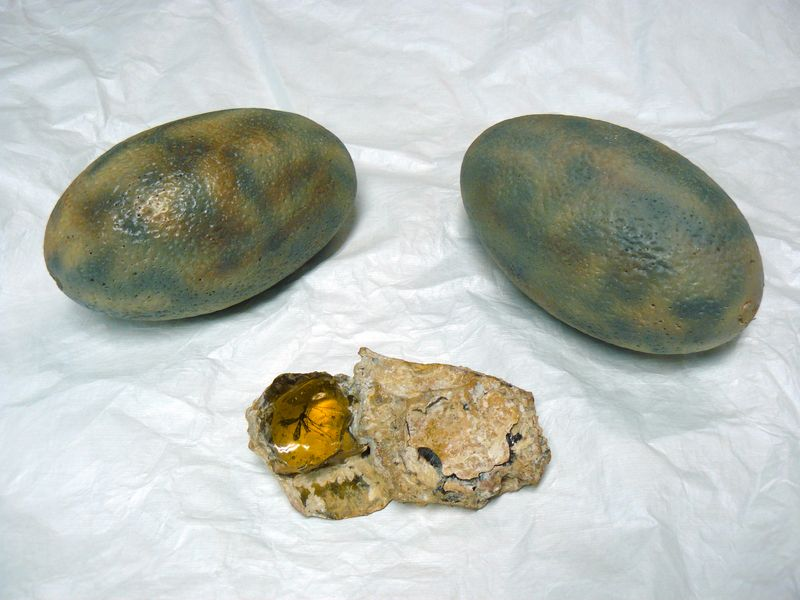 "Dinosaur eggs and a mosquito preserved in amber, two props from the set of the movie ""Jurassic Park"""