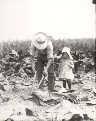 Tobacco Cutting, Lancaster, Pennsylvania. National Museum of American History.