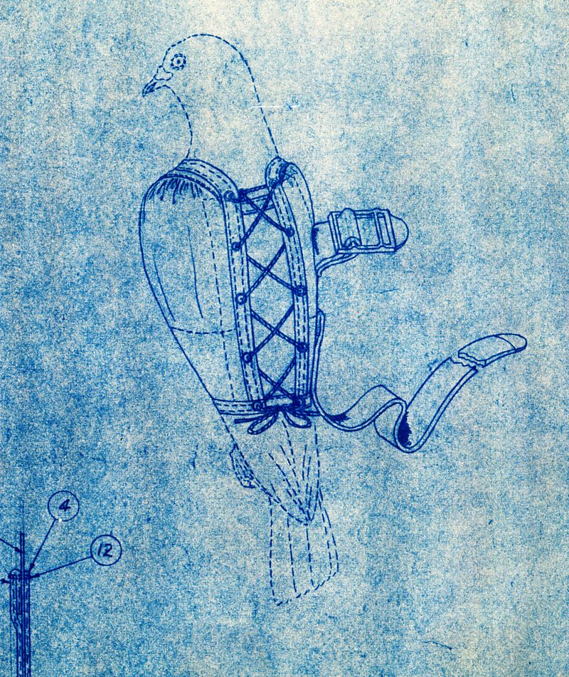 Pigeons in bras go to war national museum of american history pigeon vest blueprint important do not retain pigeon in vest in excess of malvernweather Image collections