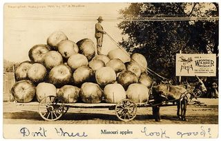 "Missouri apples, exaggeration postcard, Wm. H. Martin, 1909 Sent from N.E. Hillock to Mrs. Fred Reinhardt, Merriam, Kansas. Postmarked: Lexington, MO, June 24, 1909. Message on the back: ""All's well in Lex- I have not forgotten you Lily. But have been so busy and it has been so warm I have never had time to write. But will write soon. With best wishes From N.E. Hillock"""