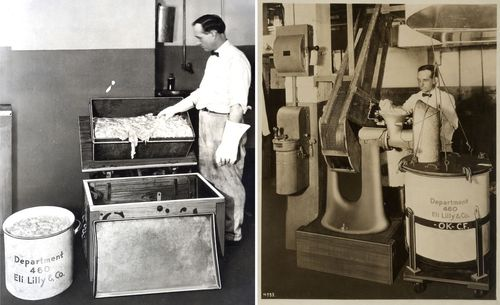 On the left, pancreas glands are examined as they arrive from the meatpacking house. On the right, the glands are run through grinders before the next step in the process, insulin extraction.
