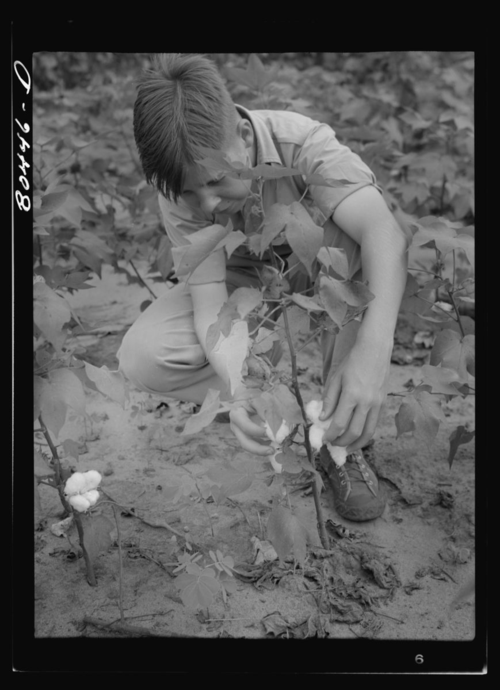 "A 1941 photograph by John Collier. ""Clark's son keeps his eye on all farm activity and is active in the 4-H Club. Coffee County, Alabama."" Library of Congress Prints and Photographs Division, Farm Security Administration Collection."