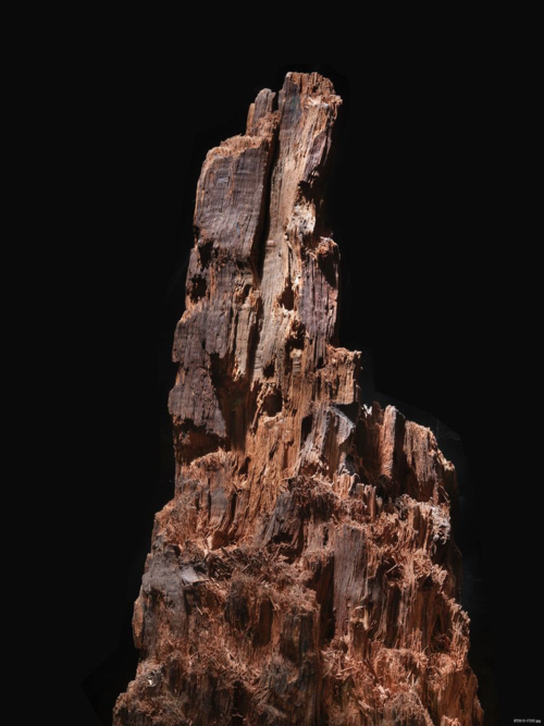 Until May 12, 1864, this piece of wood was part a large oak tree in a meadow lined by rolling, parallel ravines just outside Spotsylvania Court House, Virginia. Early that morning, entrenched Confederates, the front line of General Robert E. Lee's Army of Northern Virginia, awaited the assault of thousands of Union troops. Some twenty hours of sustained fighting later, the once-peaceful field became had become the scene of some of the war's worst horrors. The same fury that destroyed thousands of combatants tore away all but twenty-two inches of the tree's trunk. Soldiers remembered the moment the tree fell, sometime during the grisly night of May 12th, for years.