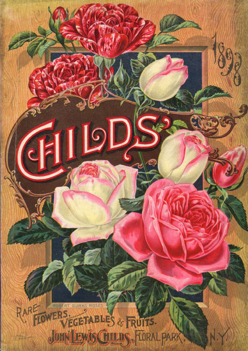 Described as ever-blooming roses in Childs' 1898 catalog, the Robert Burns Roses are each named after a song by the Scottish poet.