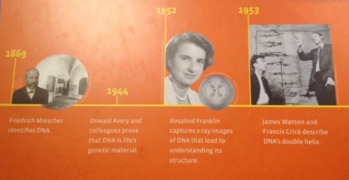 Rosalind Franklin captures x-ray images of DNA that lead to understanding its structure
