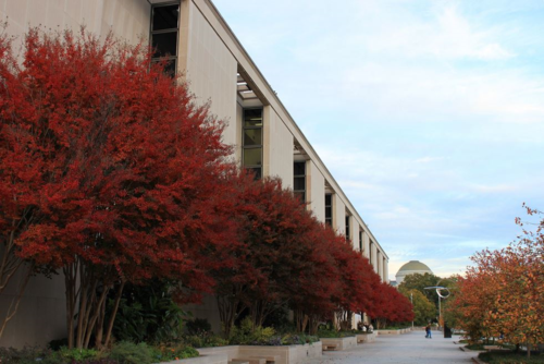 Fall is a beautiful time to explore the museum's outdoor spaces