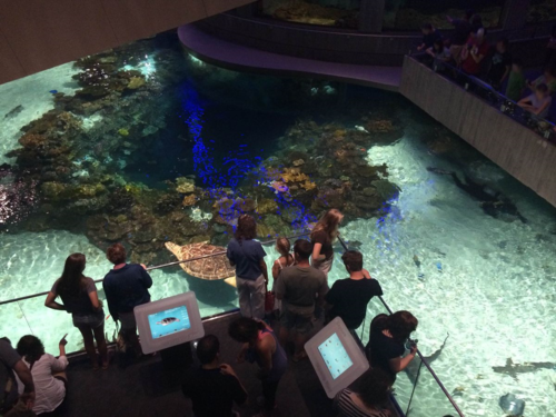 While visiting the National Aquarium in Baltimore, Maryland, I learned about the challenges designers face when creating a living exhibition. While there, I admired their interactive screens allowing visitors to access information about the animals.