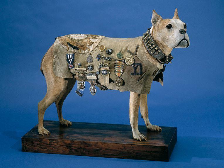How did animals (even slugs) serve in World War I?