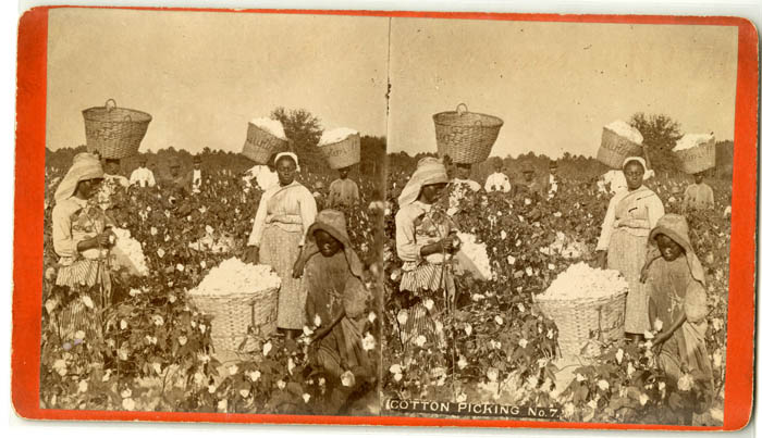A stereotype photo of African American people picking cotton.