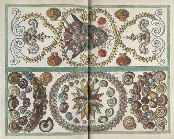 Illustrations of seashells