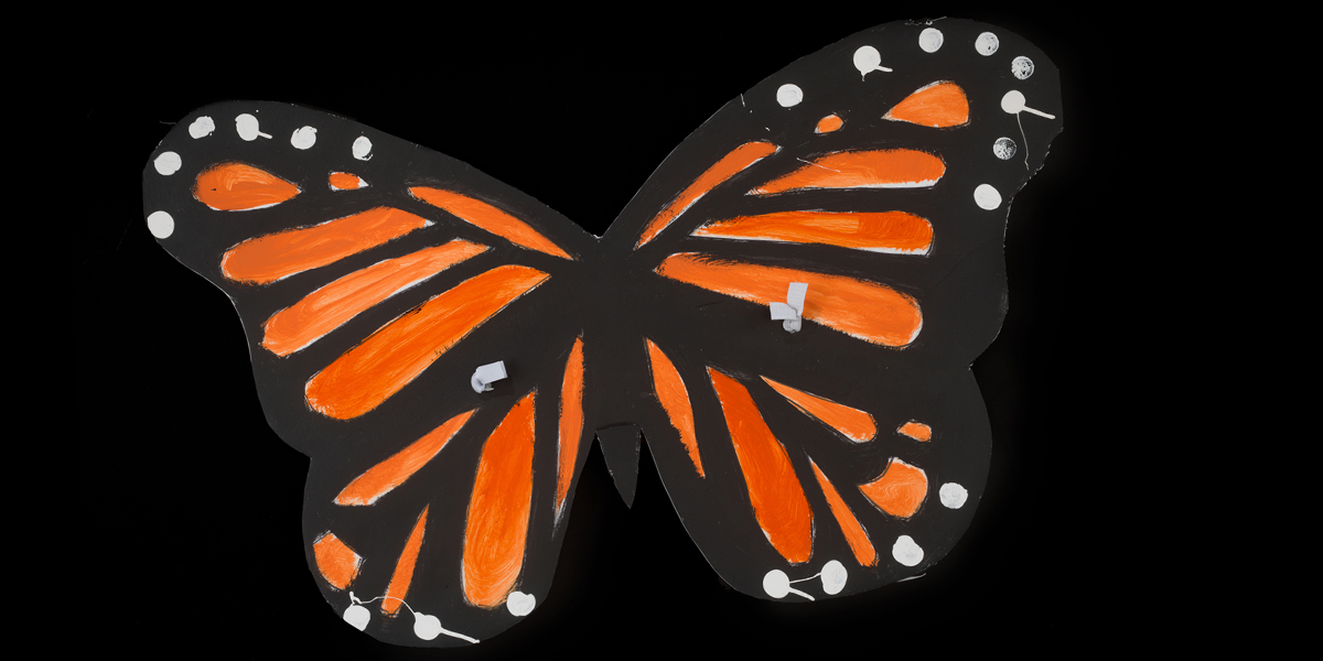 How butterfly wings helped a new collecting initiative take flight