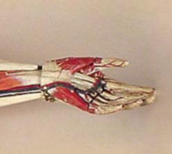 Artificial Anatomy