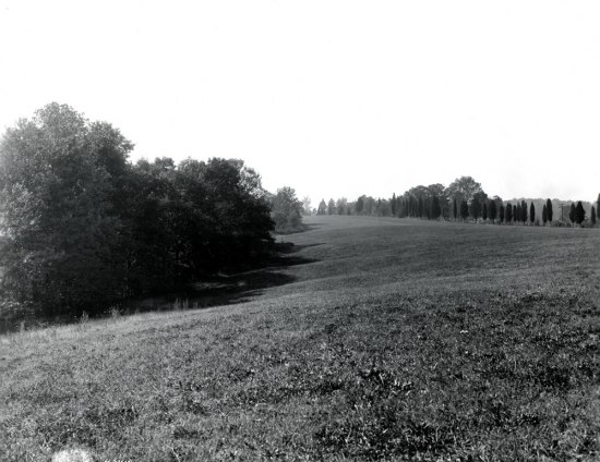 Black and white photo, outdoors. Grassy field and short tree/bushes.