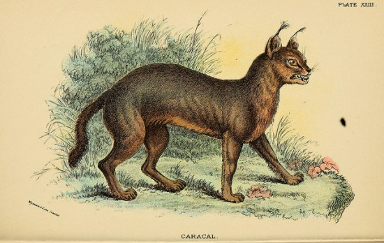 An illustration on a tan background of a cat-like creature, with large eyes and tufted ears. You can see the cat's ribs slightly and it is baring its teeth