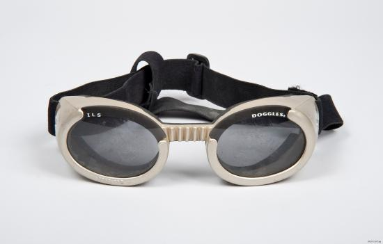 Photo of white dog goggles