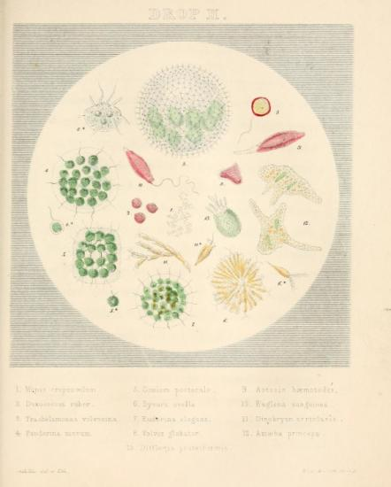Illustration showing things found in a drop of water
