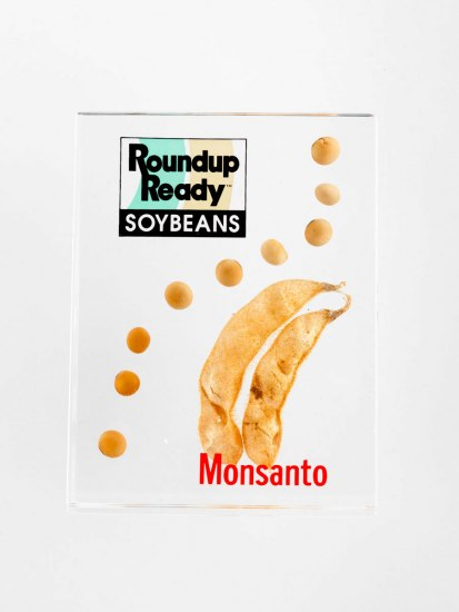 "This 1996 Roundup Ready soybean souvenir is a small, white advertisement that includes a photo of two soybean pods and a line of soybeans. The text reads: ""Monsanto"" and ""Roundup Ready Soybeans."""
