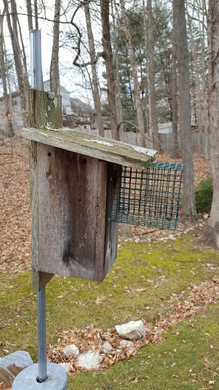 Photo of nest box (wooden box with wire mesh on stick) in a backyard. Trees and grass visible in background.