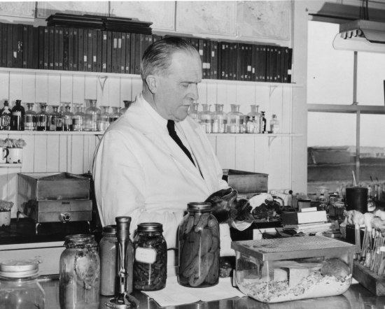 A man in a white lab coat and black tie with shiny black gloves stands in a room filled with binders and glass jars. He concentrated as he holds something white.