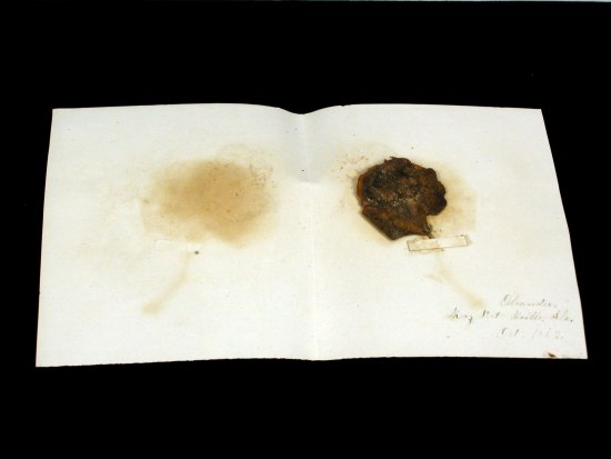 Paper opened. On left, smudge/age mark. On right, browned flower leaf or petal.