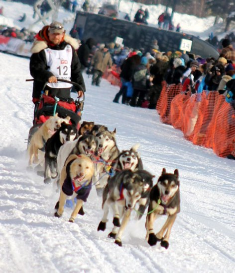 A musher and his sled dog team in motion