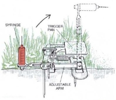 Illustration showing how a Vac-Trap works. Green grass, syringe, arm, and trigger pan shown.