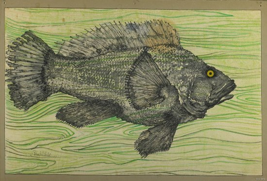 A green picture on some sort of board. It depicts a gray fish on a background that looks like abstract seaweed. The fish has a very surprised expression, as if he had not expected to be there.