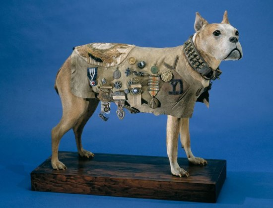 Taxidermy dog wearing vest covered in metals