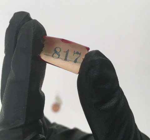 Small slip of paper with a number on it. In a gloved hand. The glove is black.