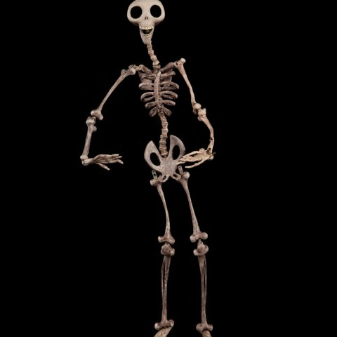 "Skeleton from ""Corpse Bride"""