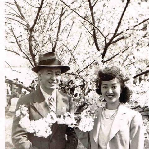 Happy couple posing beneath cherry blossom trees